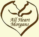 All Heart Morgans is located in northern Alberta just outside of Grande Prairie.